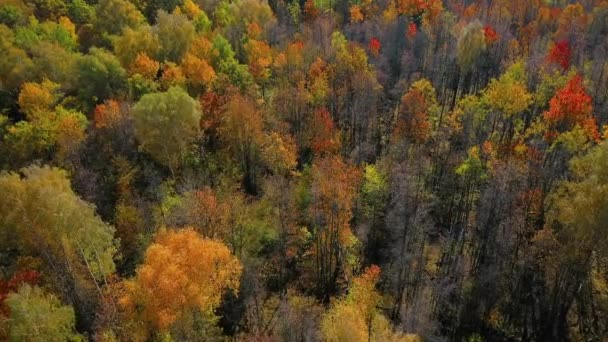 Low flight of the quadcopter over the tops of colorful trees