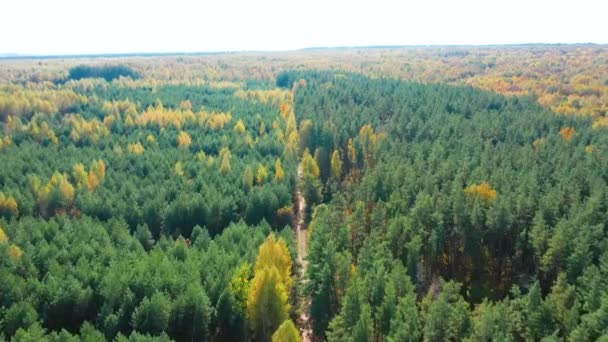 Aerial video of a flight over a dirt road in an autumn forest during leaf fall
