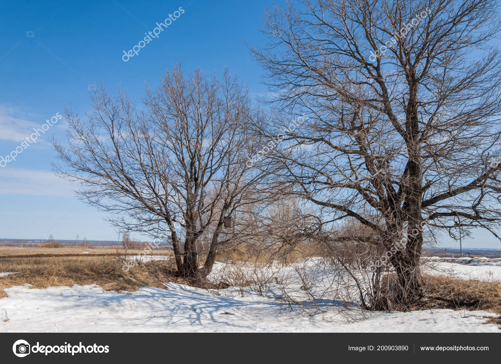 Primavera Nella Foresta Erba Appassita Ultima Neve Bella Giornata