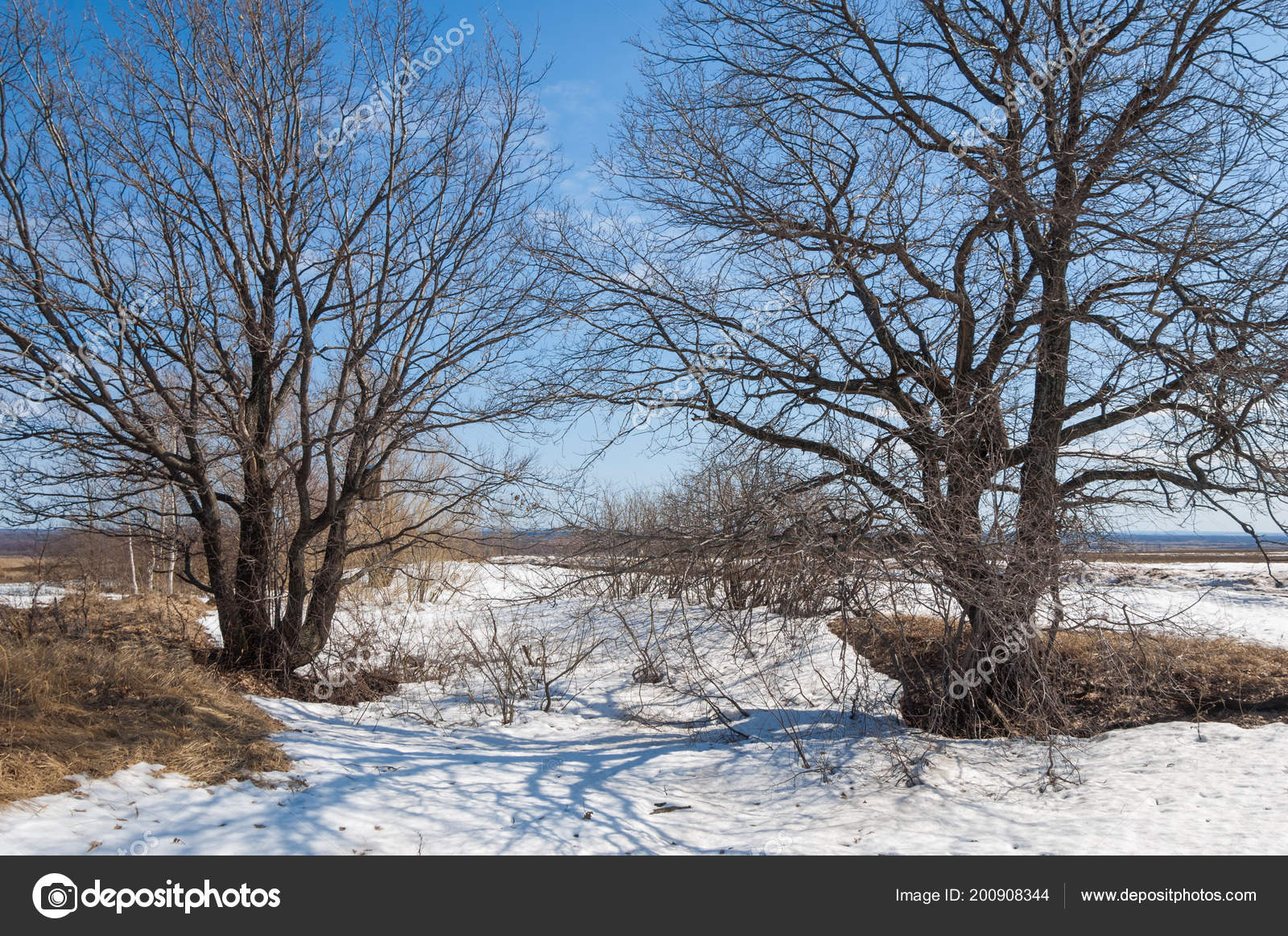 Wallpapers Snowy Forest Spring Forest Grass Withered Last