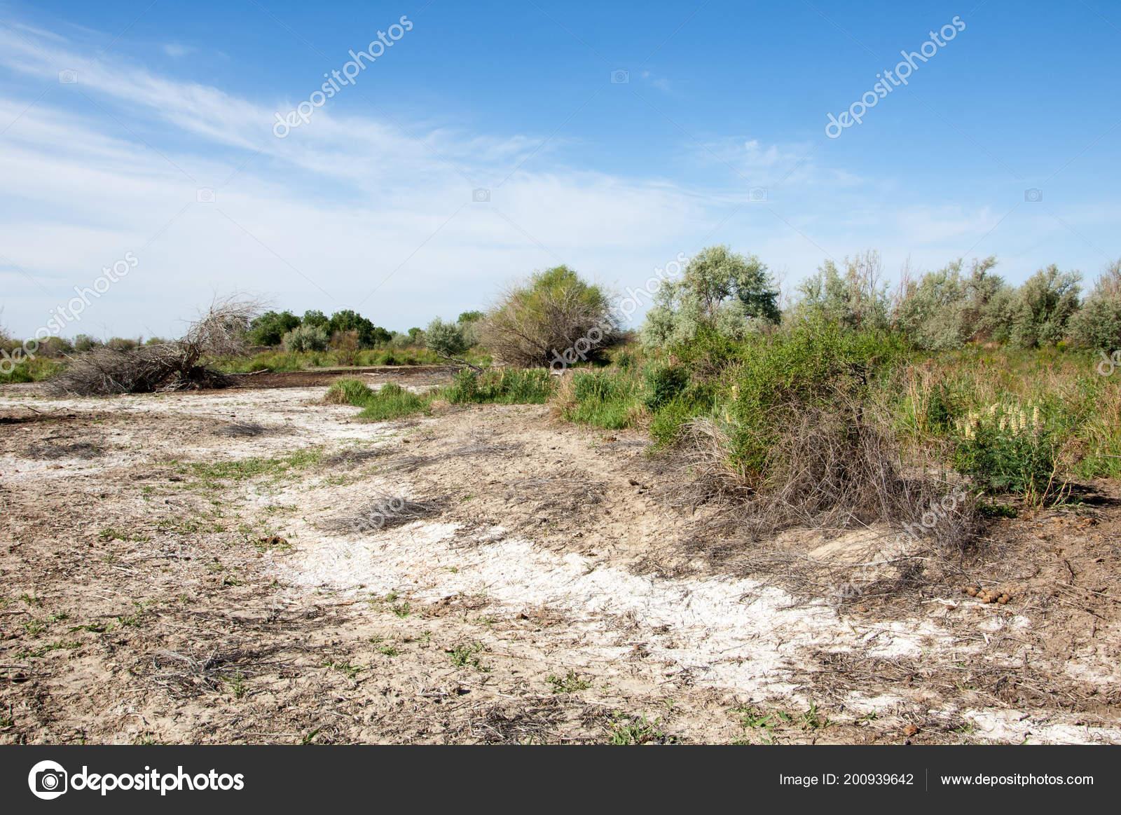 草原の塩類集積土壌 塩塩塩 草原...