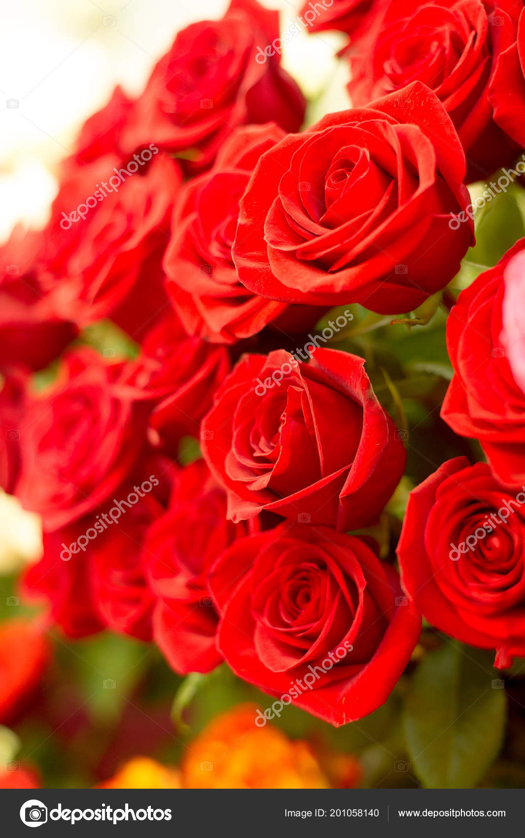 Разные цвета роз