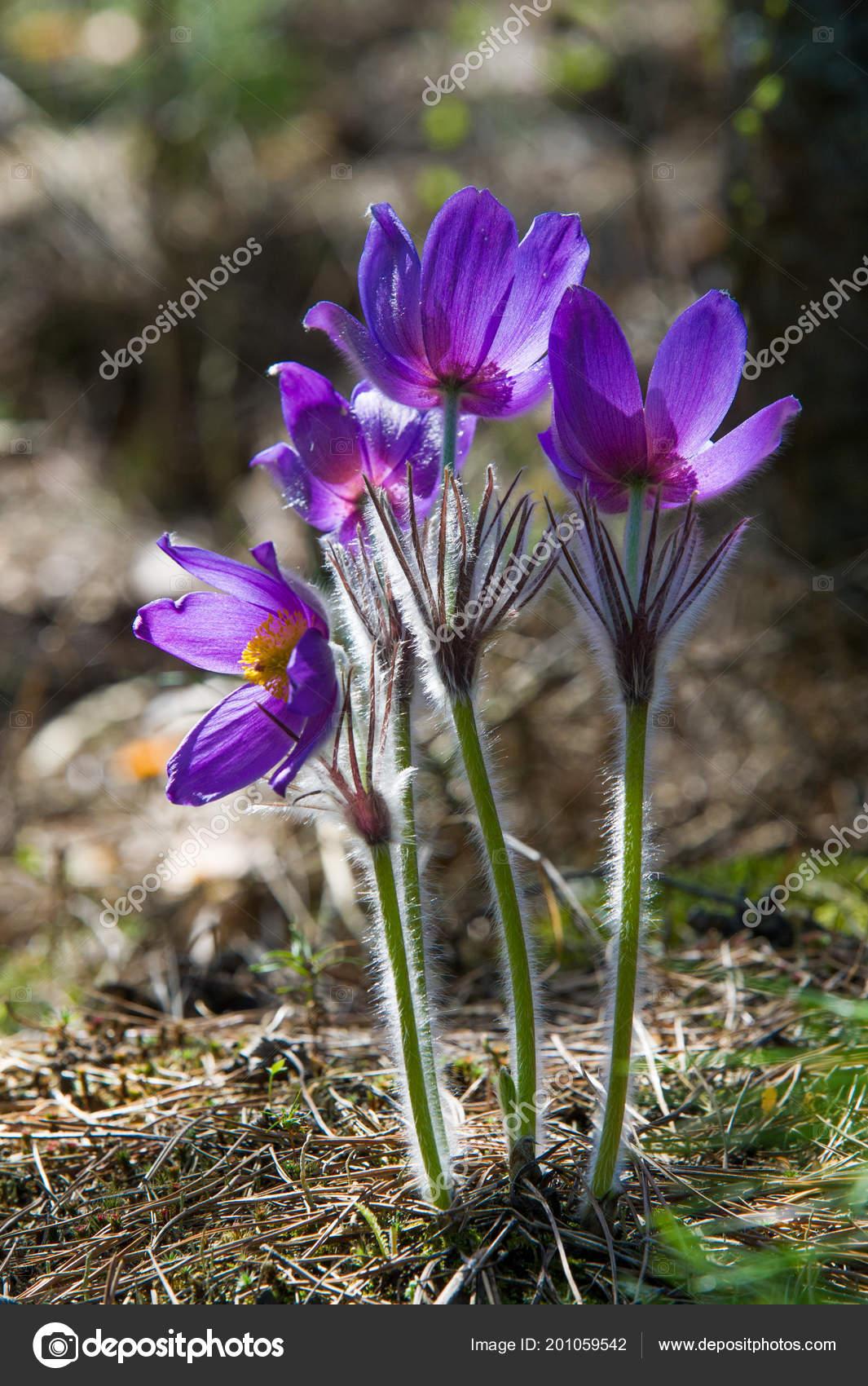 Wiosenny Krajobraz Kwiaty Rosnące środowisku Naturalnym Wiosna Kwiat
