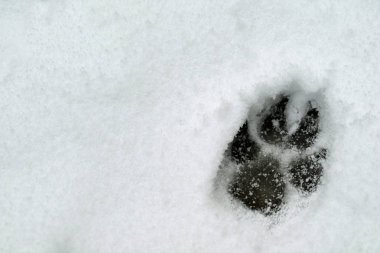footprint of a dog in the snow with copy space