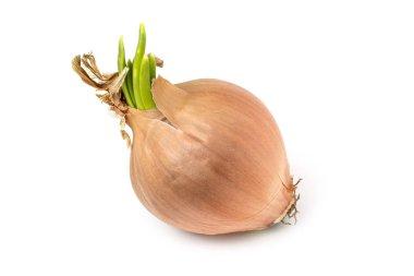yellow onion on white background, isolate