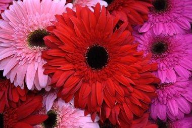 bouquet of beautiful gerbera flowers, close view