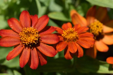 beautiful flowers growing in garden at sunny day