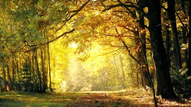 Listí podzim v dubový les na podzim
