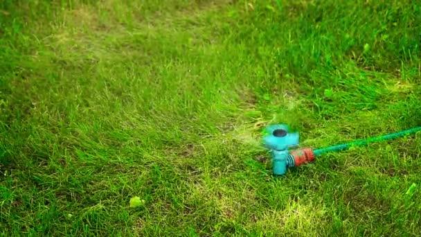 Vodní postřikovač na trávníku v pohybu za horkého letního dne HD 1920x1080
