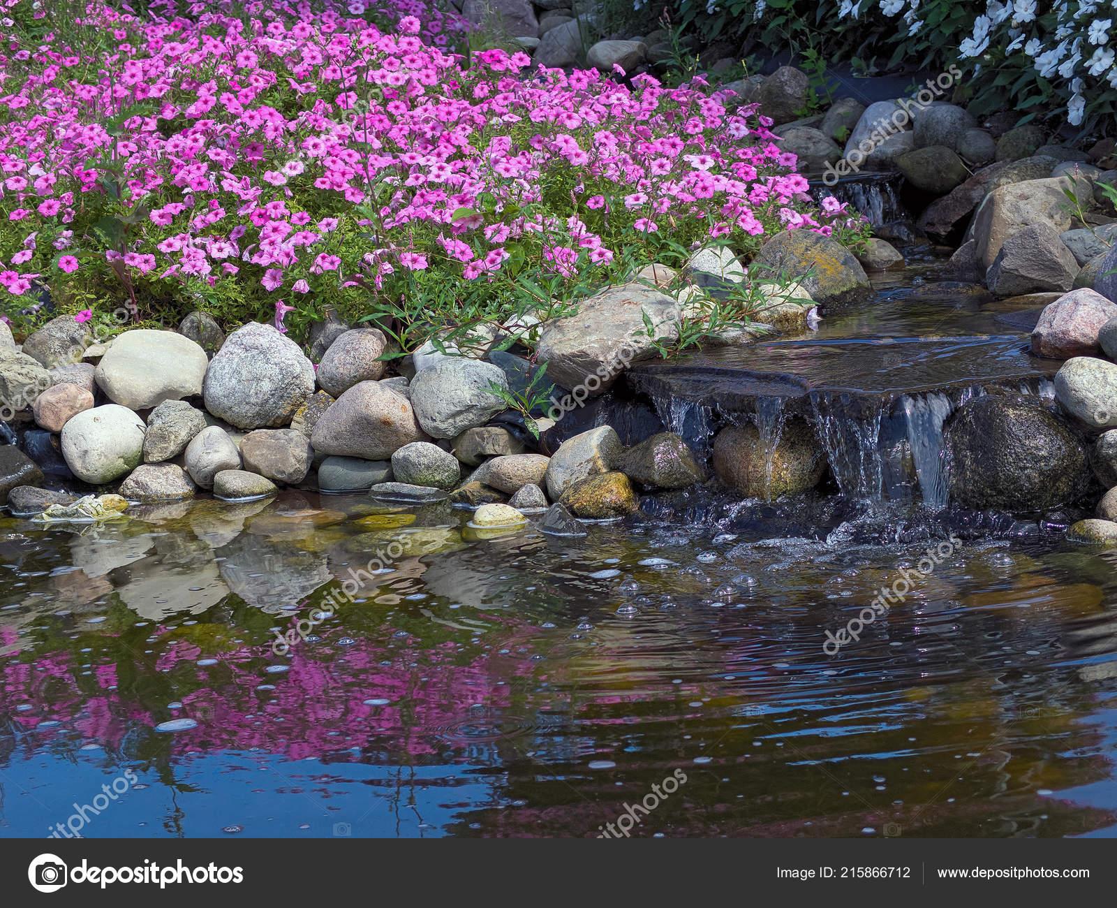 Plantes Pétunia Roses Chute Eau Dans Jardin Rocaille Avec Réflexion ...