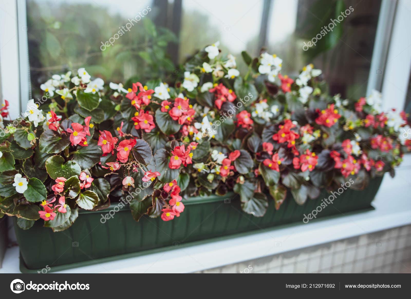 Bunte Blumen Fenster Französischer Stil Balkon Blumenkasten ...