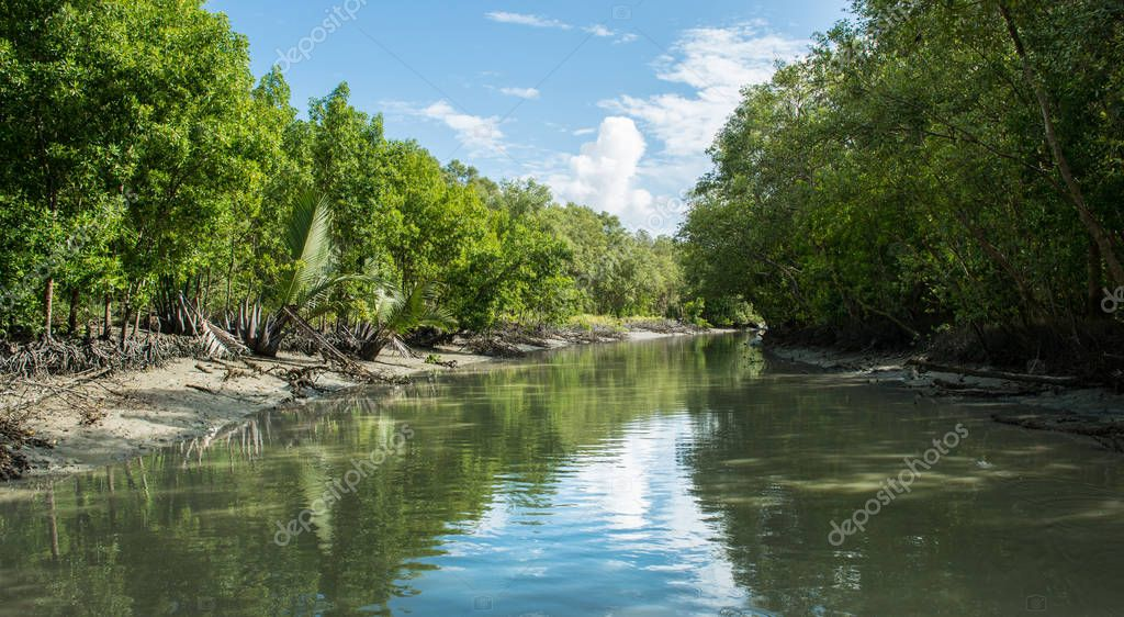 Mangrove forest alongside a river in Penang