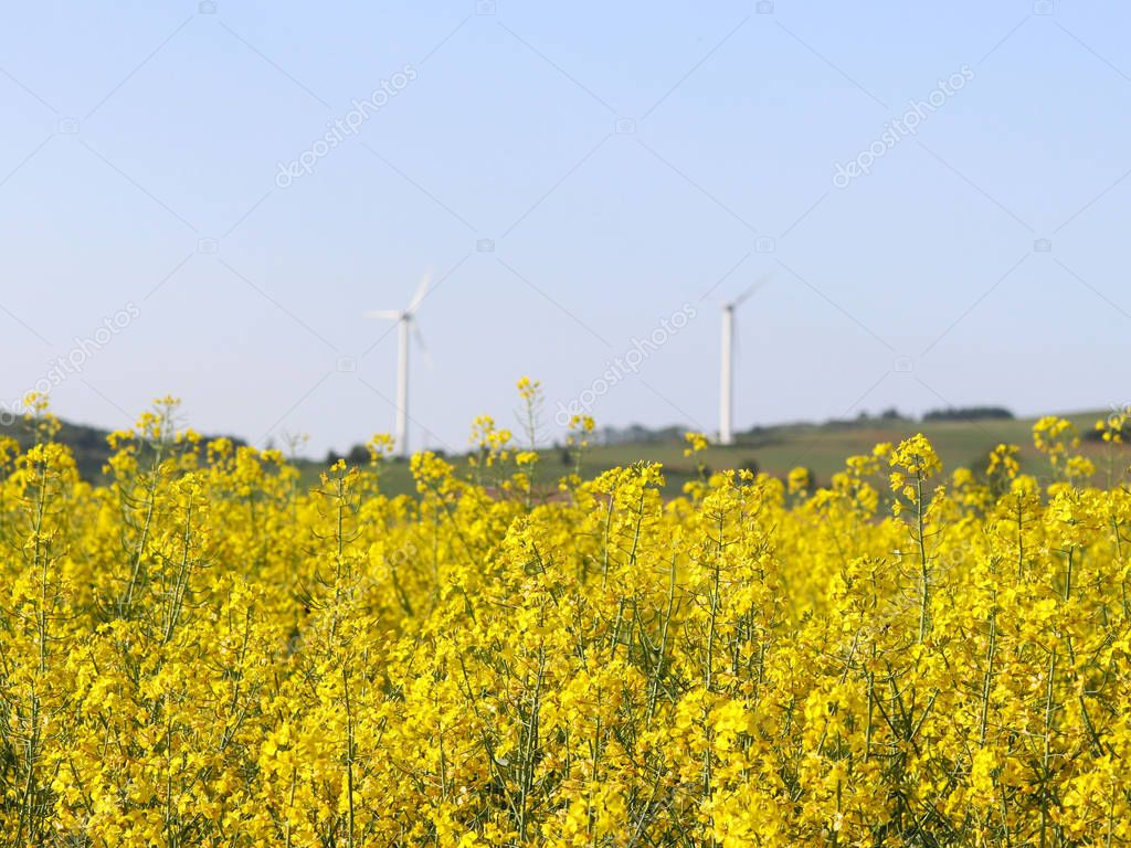Wind power station in a raps fields. Rotating blades of energy generators. Ecologically clean electricity. Modern technologies for the use of natural resources.