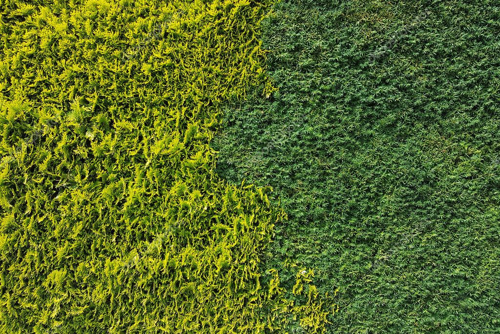 Beautiful background of green plants, texture for design. Landshapht desing
