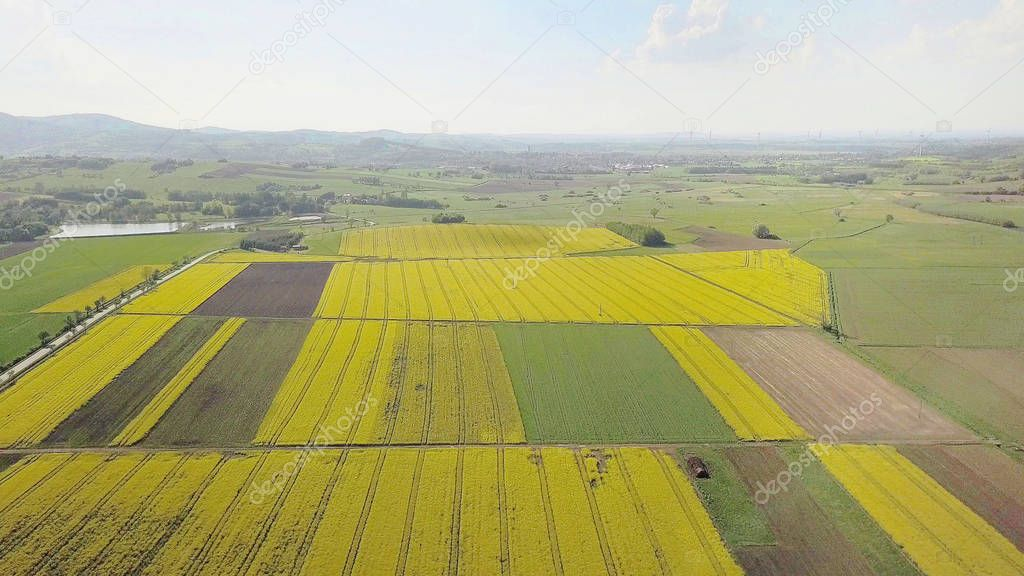 Rapeseed fields from the height of bird flight. Shooting from the drone or aircraft. Agricultural business. Growing oil plants for alternative ecological fuels for cars. Flowering plants and future harvest