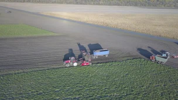 Sklizeň cukrové řepy. Kombinace a auta odstraňují kořenové plodiny z pole. Letecký průzkum z dronu nebo kvadrokoptéry. Podzimní polní práce na farmě. Sklizeň surovin pro výrobu cukru.