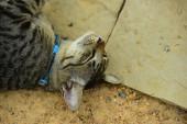 aranyos macska feküdt a földön