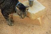 Aranyos macska játék a szabadban