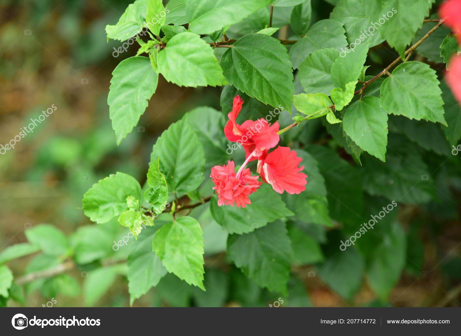 Beautiful Flowers Garden Blooming Summer Landscaped Formal Garden