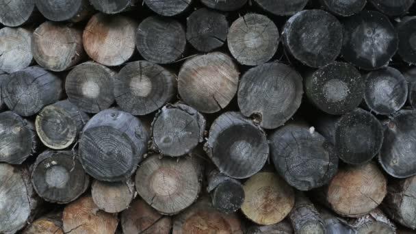 Hromadu dřeva. Textura pozadí dříví