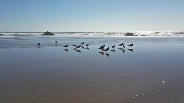 Klid a mír zobrazení skupiny racků na pláži s odrazy
