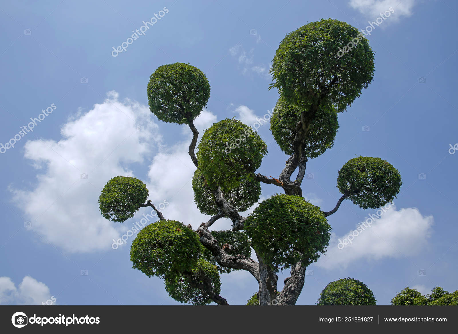 Large Bonsai Tree Against Blue Sky Stock Photo C Chrupka 251891827