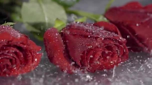 Detail. Červené květy růže v hustém dešti v noci v louži.