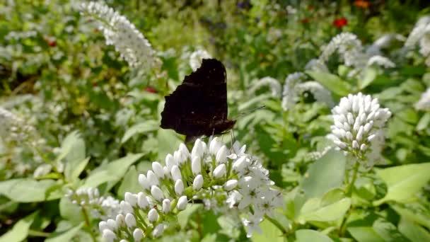 Černý motýl s květy a zelenými listy