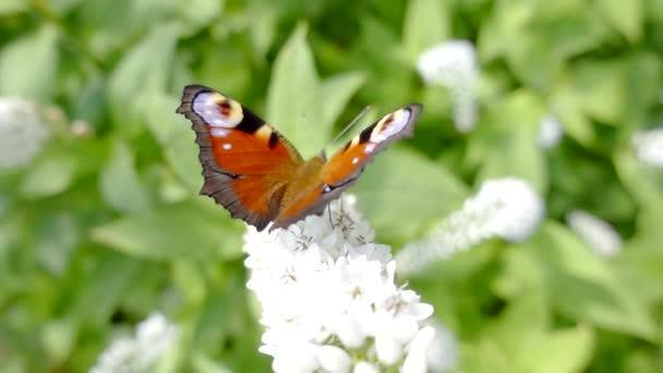 Close up shot of a beautiful, majestic butterfly.