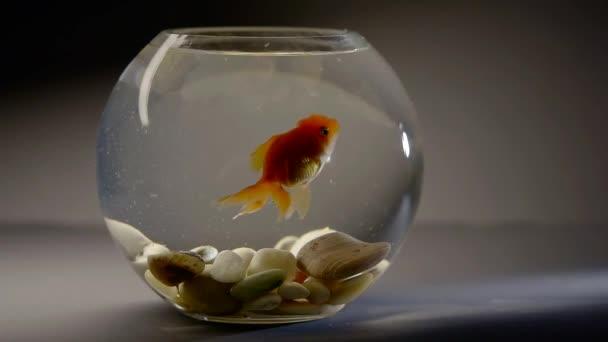 Malé akvárium s rybkami položil na stůl
