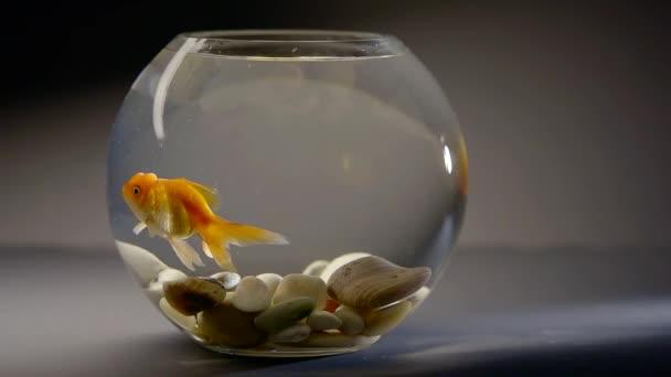 Malé rybičky v misce na stole.
