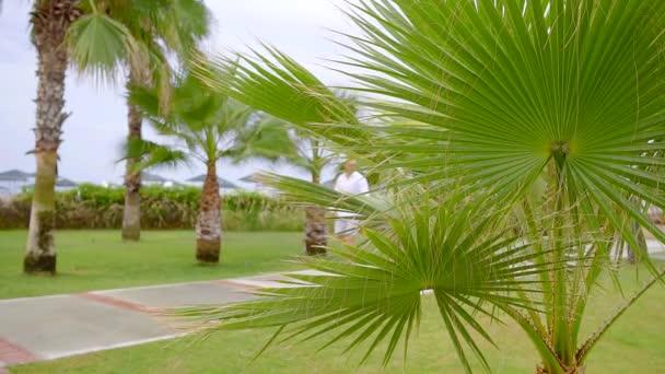 Romantická procházka milující pár v tropickým parkem, muž a žena jsou procházky, drželi se za ruce, objímání a líbání