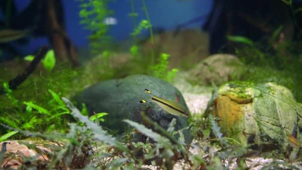 Podvodní scéna s barevné ryby sladkovodní akvárium