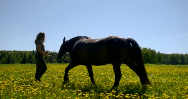 hostler woman is walking with horse on lawn in summer day, holding reins