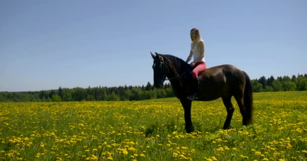 young female rider is sitting on horseback in summer sunny day, animal is on blooming lawn