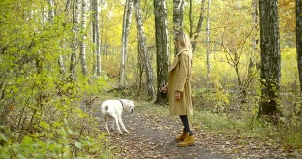 fena pes milovník je procházka v lese s bílým buldokem ve dne v lese, zažloutlé stromy