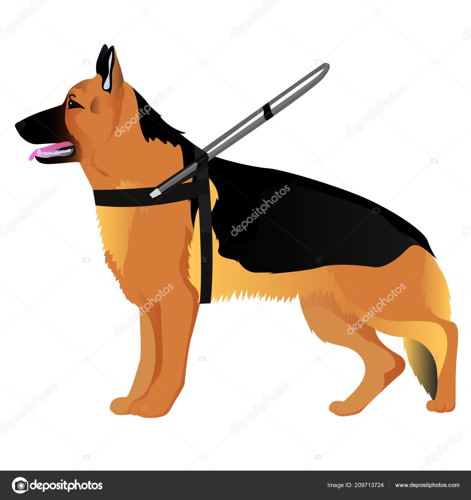 German shepherd guide dog — Stock Vector