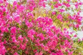 Fotografie Krásné stromy keře v parku se květinovými zázemí pro přírodu