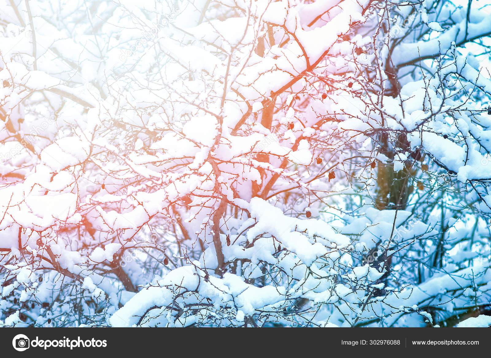 hermosas fotos de invierno naturaleza Hermosos Rboles En Invierno Sobre La Naturaleza En El Fondo