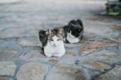 dvě kočky ve městě Paros