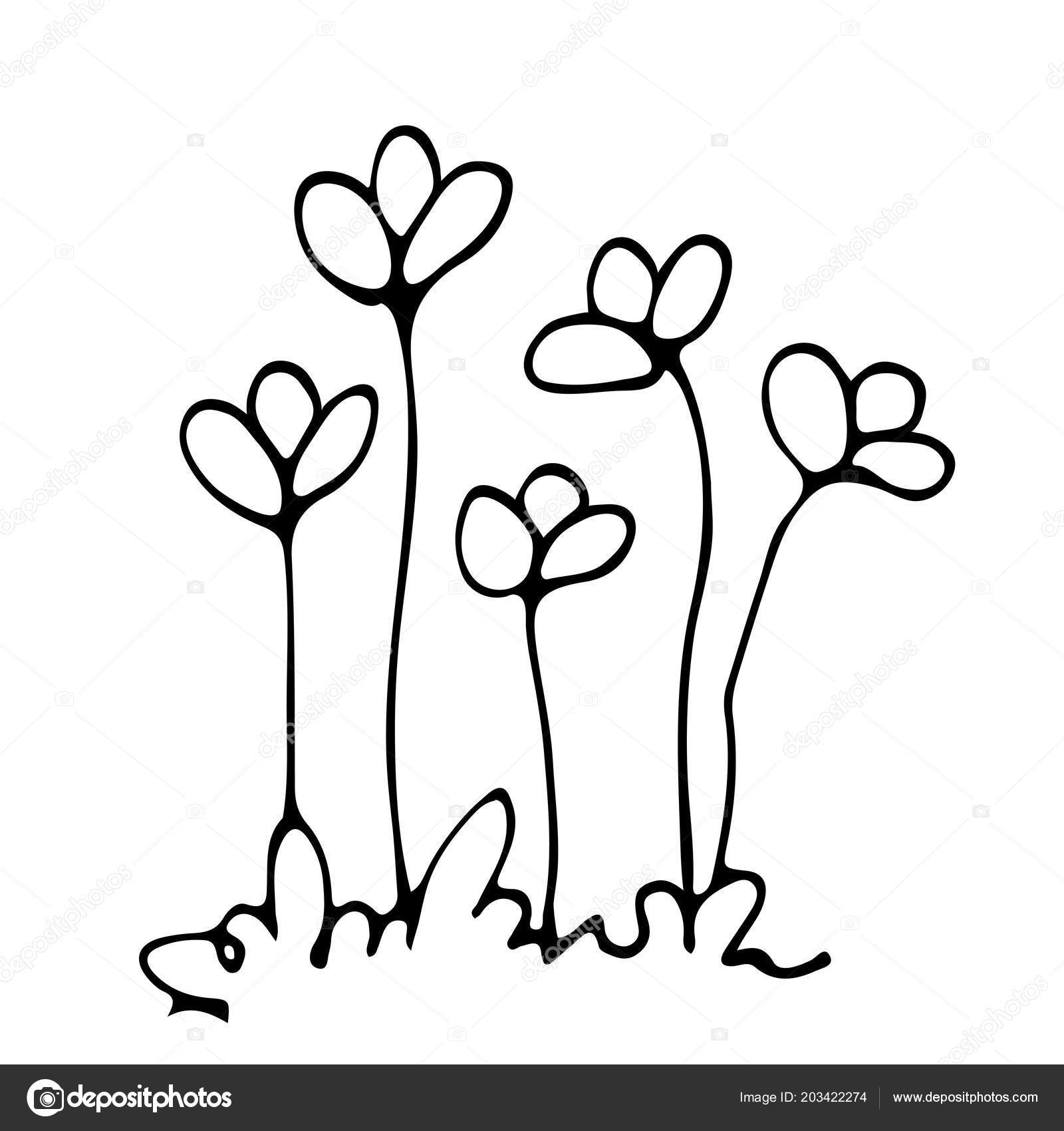 Nacrtnete Zahonu Kvetinove Kompozice Kresleni Volnou Rukou Stock