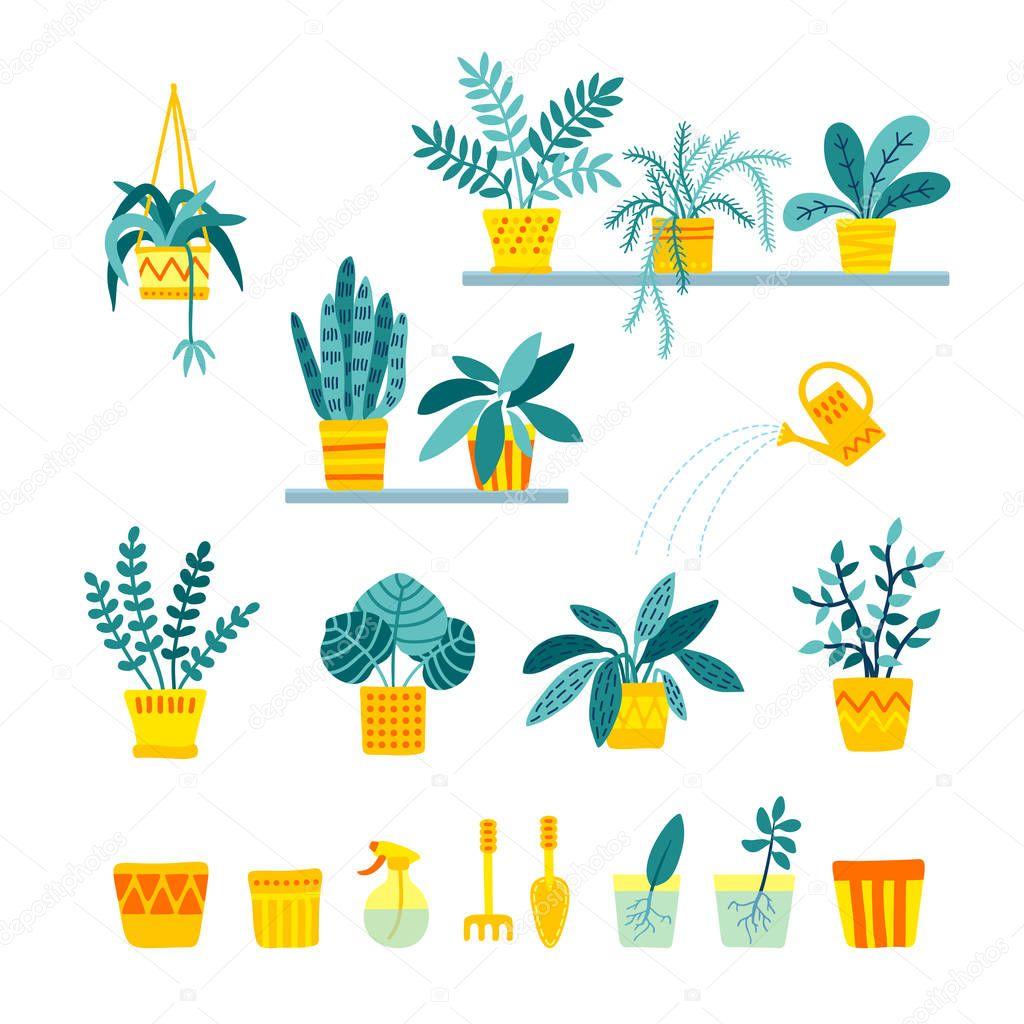 Set of indoor folliage plants, houseplant care, growing and watering in flat style