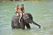 Kinder reiten Elefant über Fluss, Thailand ko chang