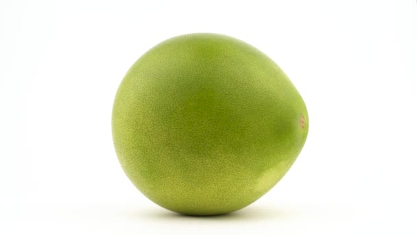 One big shaddock pomelo fruit. Water drops appears while rotating. Isolated on the white background. Close-up. Macro.