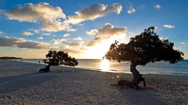 Alberi di divi divi sulla Eagle beach sullisola di Aruba al mare caraibico al tramonto