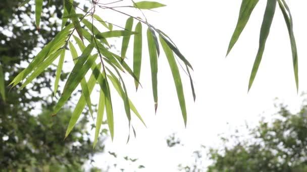 bambusz levelek a kertben