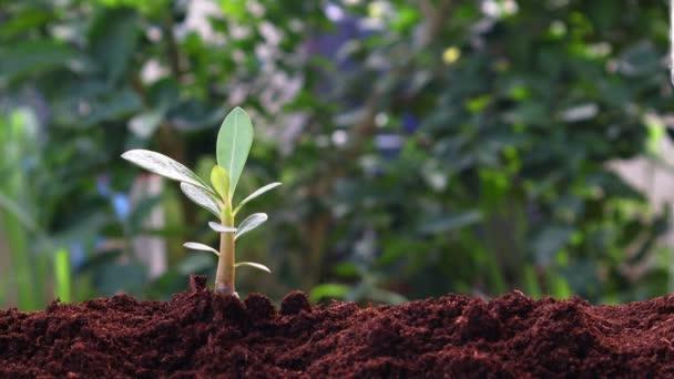 Rostlina roste na půdě s rukou zalévání v zeleni