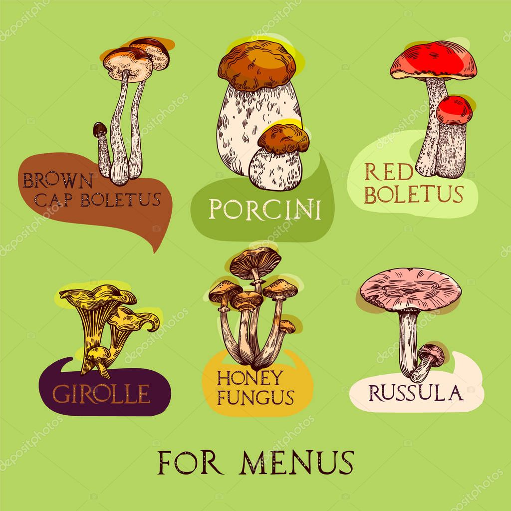 Colored mushroom set in engraved style with lettering. Each object with charts and titles. Vector illustration for menu and recipes.