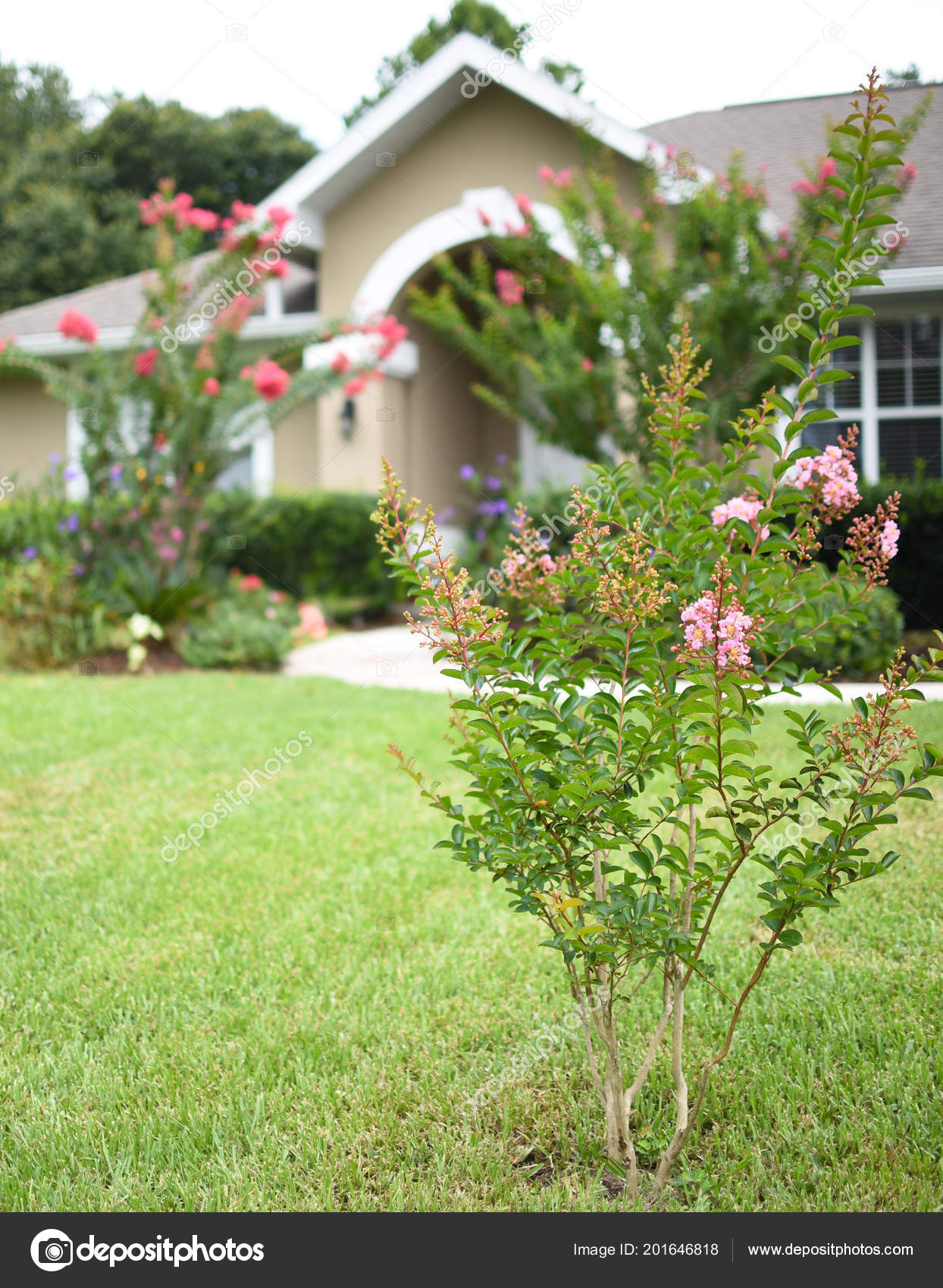 Front Door Arc Florida Style Home Tan Color Crepe Myrtle — Stock ...