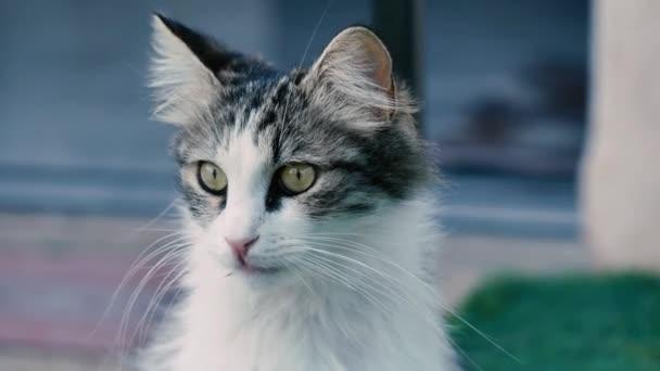 Kíváncsi cica körülnéz. Vicces mozog a fülét.